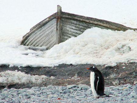 Penguin and the boat, Antarctica