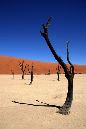 parch: Dead acacia trees at Dead Vlei, Namib desert, Sossusvlei, Namibia