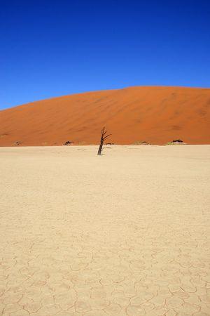vlei: Dead acacia trees at Dead Vlei, Namib desert, Sossusvlei, Namibia