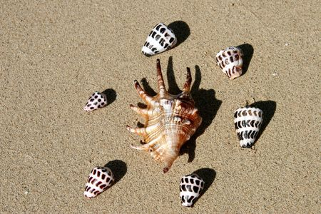 Shells, Fiji photo