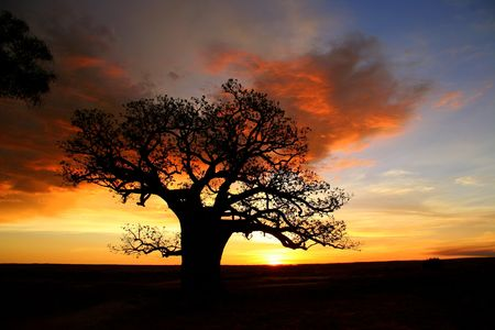 Boab tree, Kimberly, Australia Stock Photo