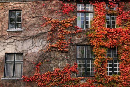 Autumnal foliage,Brugge,Belgium photo