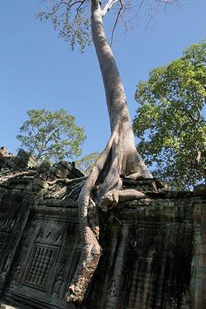 Ruins of Angkor, Siem Reap, Cambodia