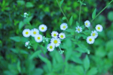 at white: White flowers Stock Photo