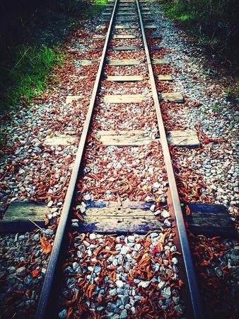 narrow gauge railroads: Autumn leaves on a vintage steam railway track