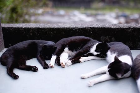 Sleeping Cat 版權商用圖片 - 15029060