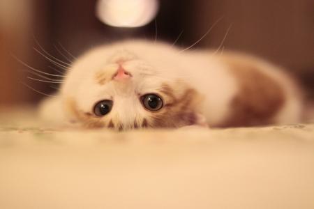 cats: I miei gatti adottati Archivio Fotografico