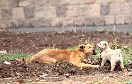 dogs playing: Two dogs playing