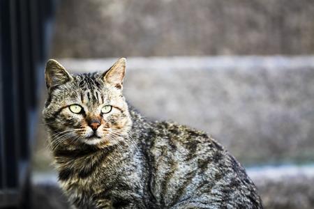 stray: The citys stray cats Stock Photo