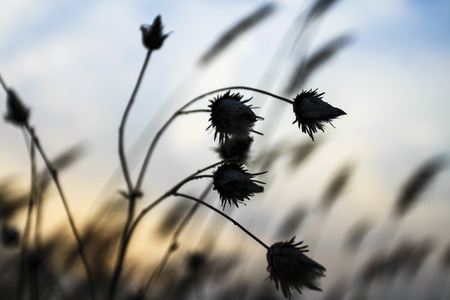 The wilderness hay Stock Photo