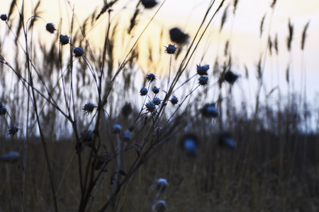 wilderness: The wilderness hay Stock Photo