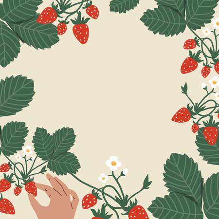 Bush with strawberries. Mans hand picking berries. Harvest Vector Illustration. Frame for text Illustration