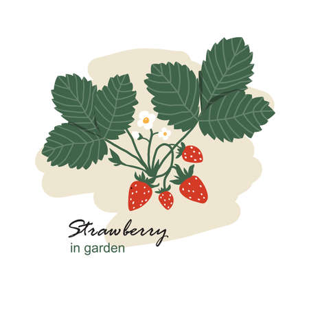 Bush with strawberries. Harvest of delicious ripe strawberries. Illustration