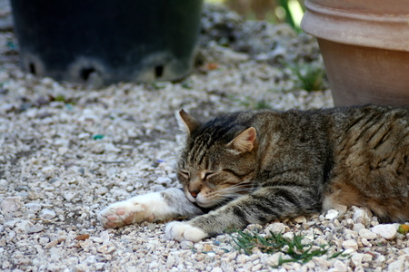 flowerpots: Tabby kitten sleeping on the ground covered by pebbles with few flowerpots in the background