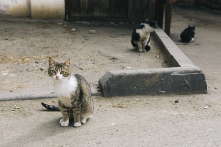 vagrant: three stray cats, one of them looking at the camera