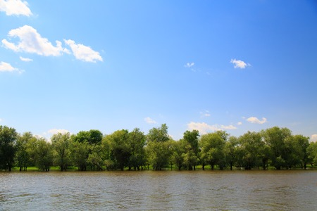 fraser river: a number of trees on the river Bank on a spring day Stock Photo