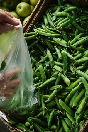 snap bean: woman with your hands puts the pods of young peas in a plastic bag from a large box on the market