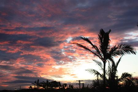 palm: palm.
