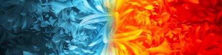 Abstract Fire and Ice element created from flower petals using color theme