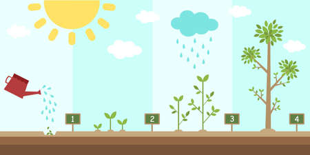 flat background of planting tree process Ilustracja