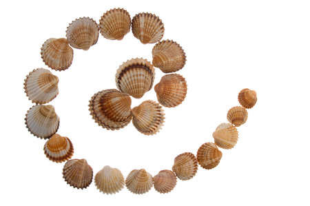 isolated shell letter @ - white background,  photo