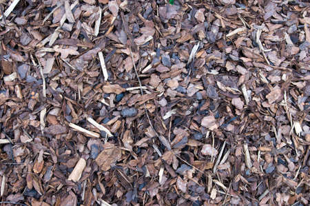 A pile of brown autumn bark Mulch for background  photo