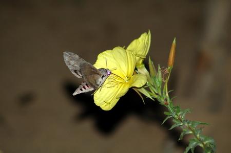 Night Butterfly Stock Photo
