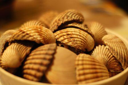 beachcomb: Shells