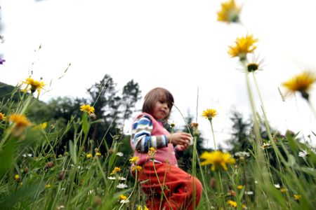 Little girl collecting flowers photo