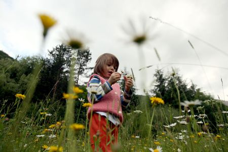 Little girl collecting flowers Stock Photo - 5200495