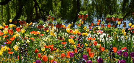 Flowergarden on spring, colorful beauty parkflowers, tulips, poppy, Insel Mainau, Bodenlake
