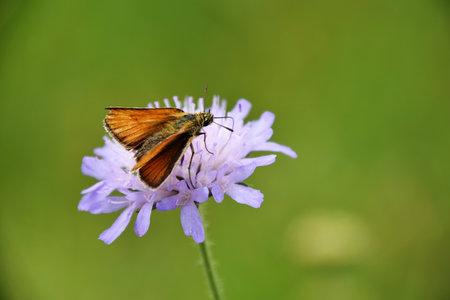 Butterfly on purple wildflower