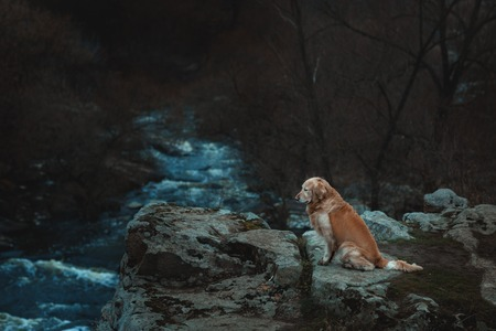 Sad dog is sitting on the edge of a precipice. At the bottom of the chasm the river flows. Stock Photo