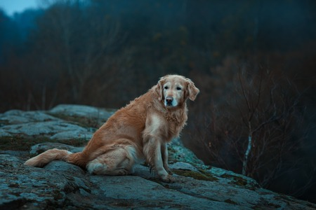 lonesomeness: Large red and sad dog.  It is on the edge of a precipice. Stock Photo