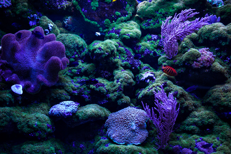 Close up of tropical coral reefs and the ocean floor.