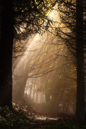 sunbeam in the forest in fall