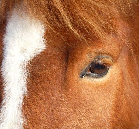 the head of a brown horse, closeup