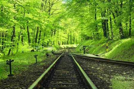 forest railway: railway track in the forest