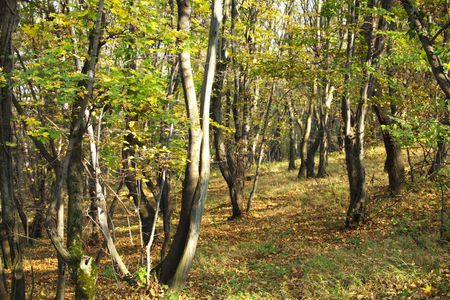colorful forest with leaves in oktober photo
