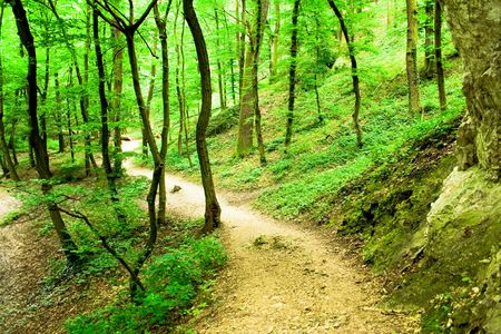 hiking trail with rocks in the green forest photo