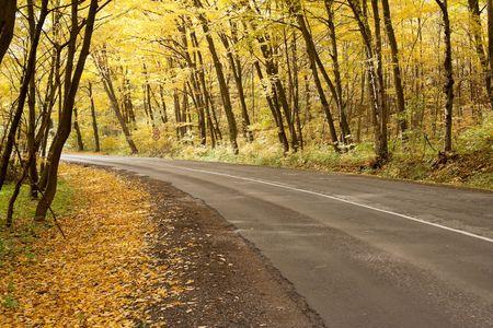 grey road in colour autumn