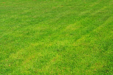 green grass in a park photo