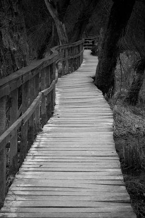 boardwalk in forest in late winter Stock Photo - 7391614