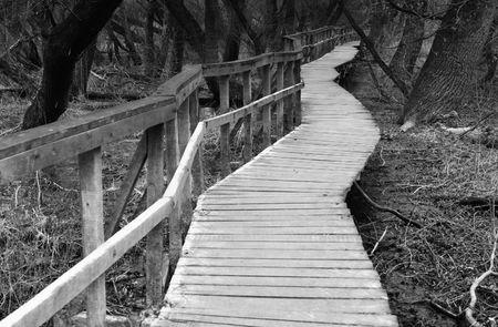 boardwalk in forest in  late winter Stock Photo - 7391613