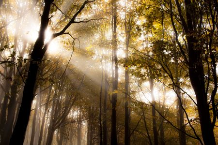 Sunrise in a forest in autumn photo
