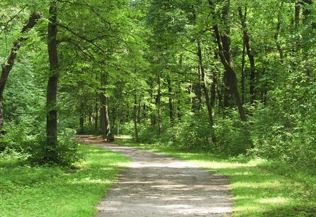Small path in the green forest Stock Photo - 7772614