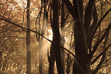 Colorful forest in autumn with sunrays behind the the tree Stock Photo - 7896652