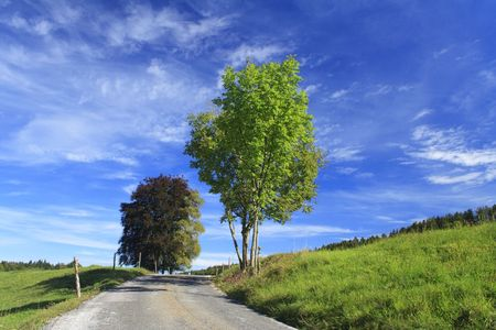 road with colorful trees in a meadow, german