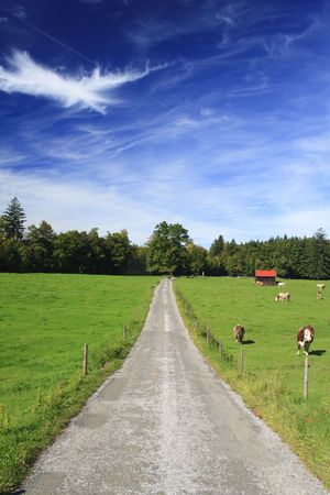 road with colorful trees in a meadow, german photo