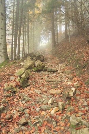 colorful forest in autumn with rocks and path